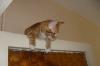 evde kedi beslemek