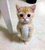 kedi seven erkek