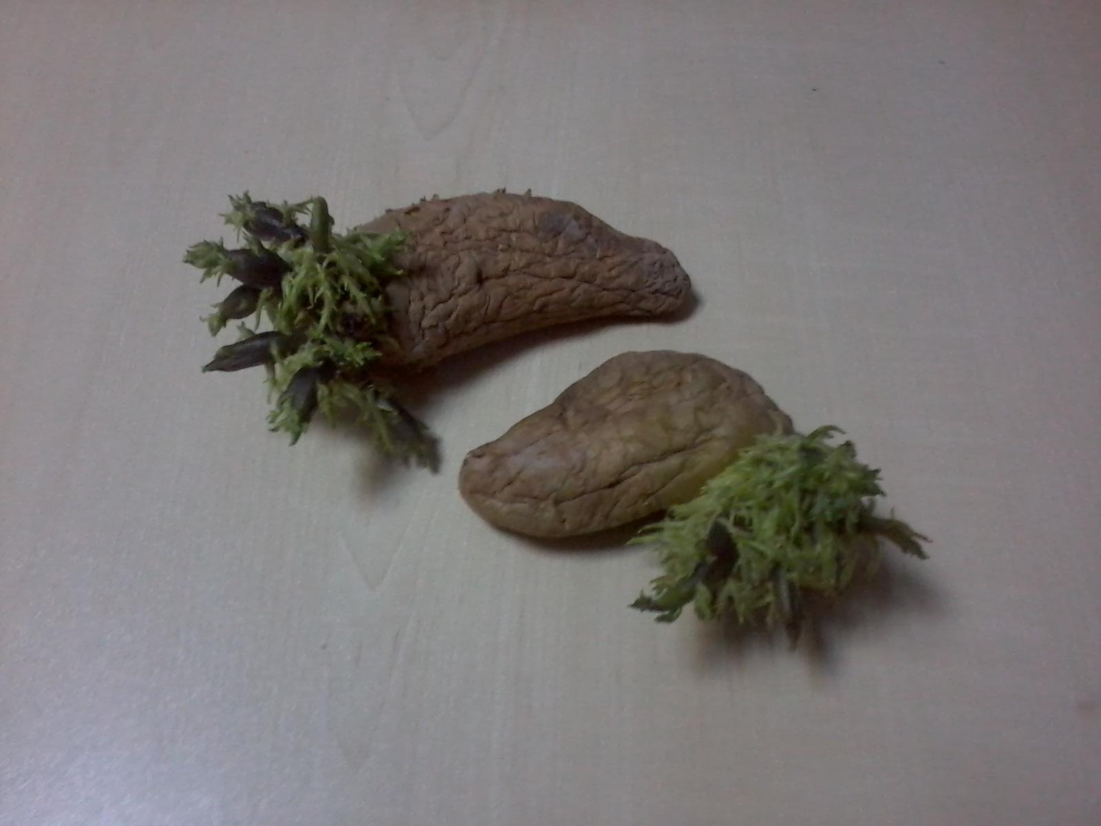 Patates Yemek Zararlı mı Bilimsel Araştırma Sonuçları