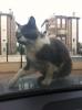 kedilerin gariplikleri